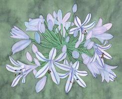 African Lily by MariaArnt