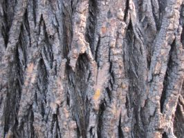 Close Up tree by S-L-J-Rabling