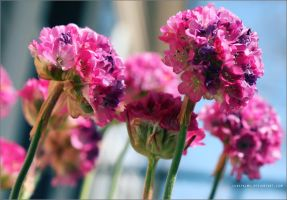 Pinks and Purples by lonepalms