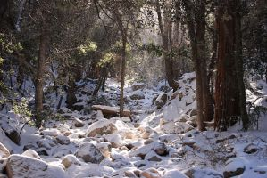 Snow in the Trees by Urmar