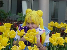 Usagi in Tulips by prismkitty