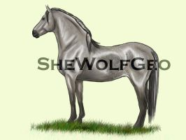 VHR: Dapple Grey Andalusian by SheWolfGeo