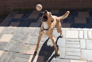 Sarge playing handball by Colin-LOCP