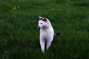 Cat. by doyoulikewaffels