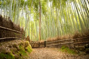 Bamboo Forest by heeeeman