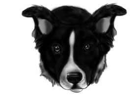 Border Collie by Themystichusky