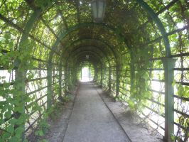 Tunnel of Nature by FlameRoxanne