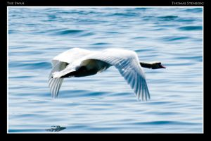 The Swan by tomba76