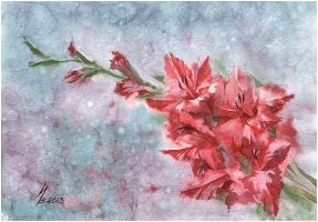 red gladiolus by kosharik69