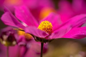 Pink nature by Pamba