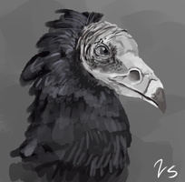 Quick Painting Turkey Vulture by VintageSoap