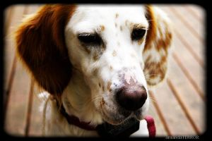 Pretty Pup by amandaWAY