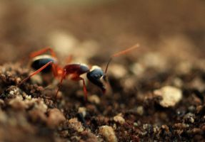 Not-So-Tiny Ant by Coraloralyn