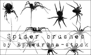 Spider brushes by ephedrina-stock