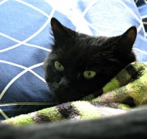 Esme in her nest by CatsWire