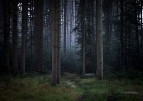 A forest by Sarah--G