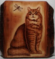 Cat with dragonfly - Pyrography by CarloFerrario1954