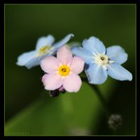 Flower 16 by Globaludodesign