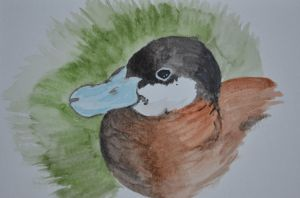 Ruddy Duck Male by whitekratoswolf
