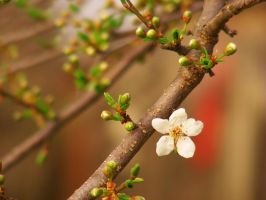 _spring_2 by victor23081981