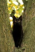 """Kittycat in a tree..."" by SaNNaS"