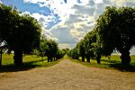 Colorful Allee by macmaister