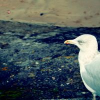 Square gull by nectar666