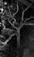 Ghost Tree by Xs9nake