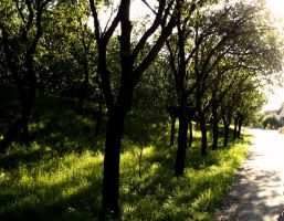orchard by Marcco666