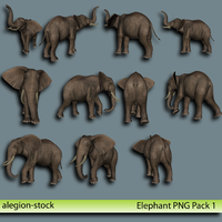 Elephant PNG Stock Pack 1 by Alegion-stock