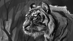 tiger BW by AlaxendrA