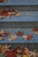 Leaves by GuineverePhotos