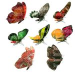 Butterfly Stock Side View by Shoofly-Stock