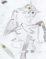 Bird Sketches by strawberry-chan13