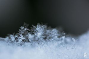 Snow 2 by sylvaincollet