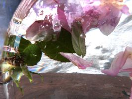 Under water rose petals by MODDEYDOO
