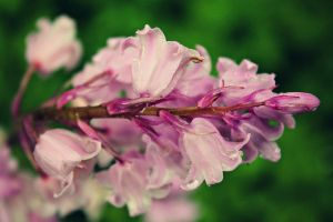 flower collection by ilovenatural