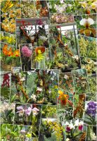 Orchid Exhibition Budapest by Morzsi