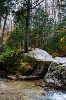 White Mountains  Fall Foliage  259 by FairieGoodMother