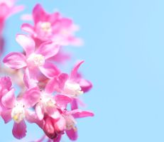 That spring feeling by pqphotography