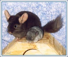 Chinchilla Nanny and Baby by Villa-Chinchilla