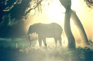 Elephant in the morning mist by thezygore