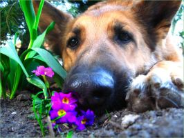 a dog in the flowers by julix16