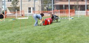 2014 Dog Festival, Try It Dog Obstacles 8 by Miss-Tbones