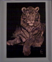 Scratch Board Tiger by cori573