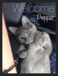 Welcome Pepper by LimitlessEndeavours