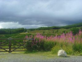 Pink Flowers In Grizedale by TanzieB