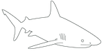 Free Shark Template by dragonlove12345