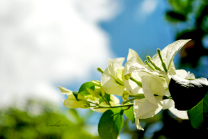 blooms on sunny day.... by xeane21