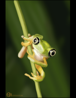 Froggy Study :P by nickhuddlestonartist
